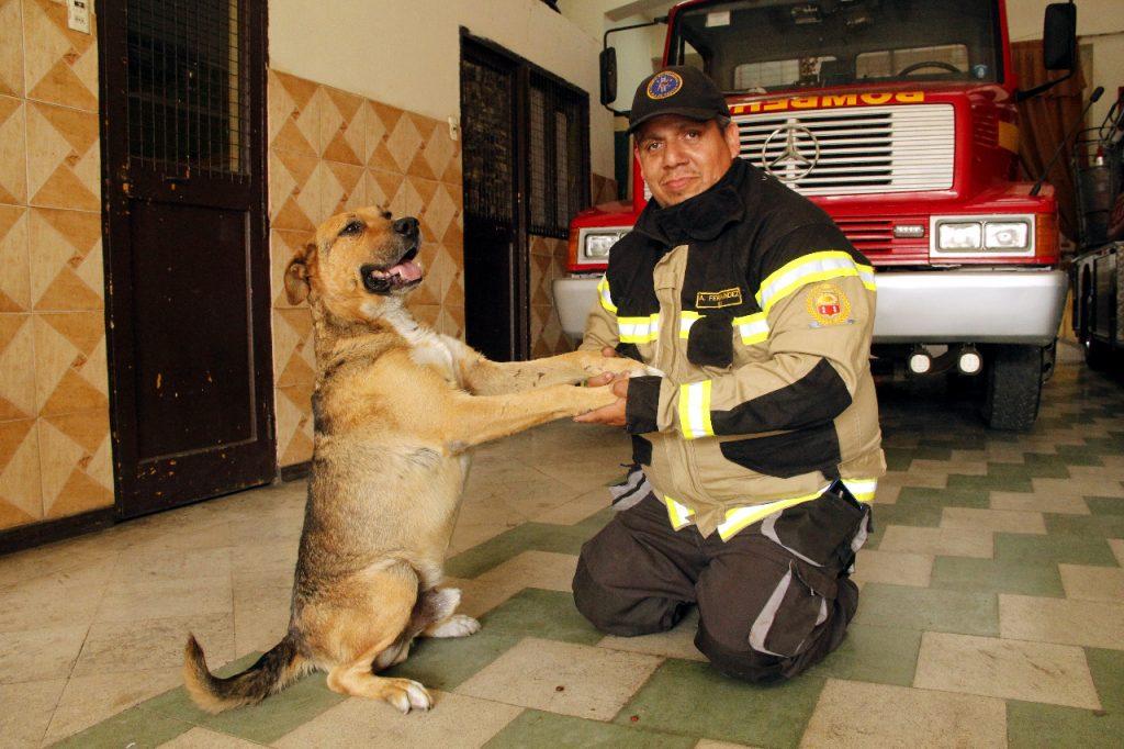 comisario perro bombero quillota